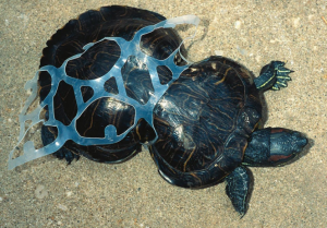 Does this plastic pollution make me look fat?
